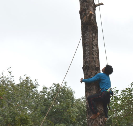 Thai Tree Cutter